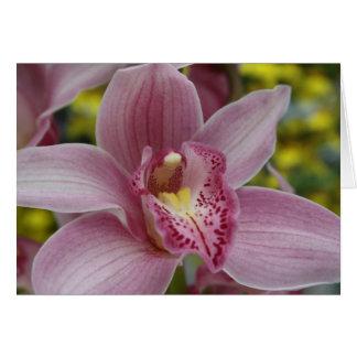Cartão Orquídea cor-de-rosa