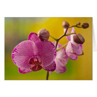 Cartão Orquídea cor-de-rosa e branca