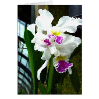 Cartão Orquídea da estufa