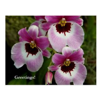 Cartão - orquídea de amor perfeito
