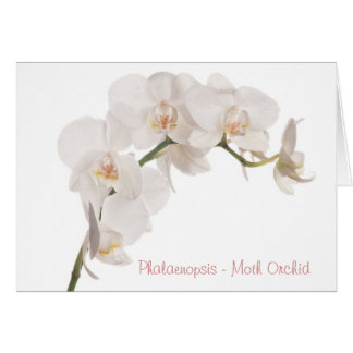 Cartão Orquídea de traça branca