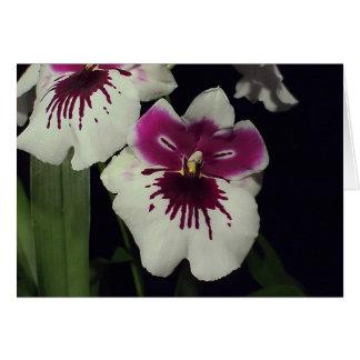 Cartão Orquídea do híbrido do Miltonia