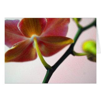 Cartão Orquídea dos haicais