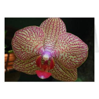 Cartão Orquídea Notecard