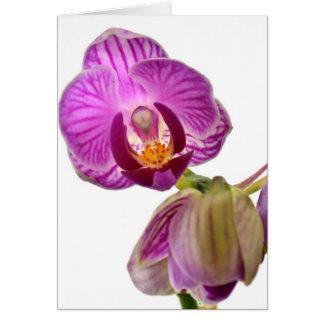 Cartão Orquídea roxa Notecard