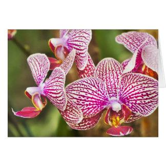 Cartão Orquídeas cor-de-rosa