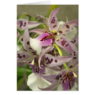 Cartão Orquídeas cor-de-rosa e brancas