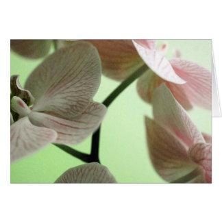 Cartão Orquídeas delicadas