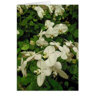Cartão Orquídeas e antúrios