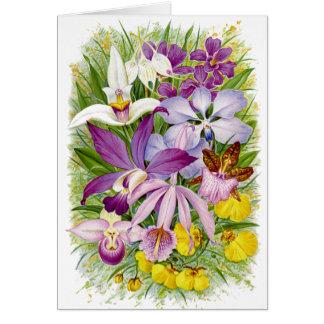 Cartão Orquídeas Notecard floral da antiguidade/vintage