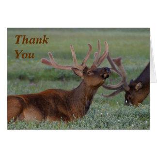 Cartão os alces agradecem-lhe notar