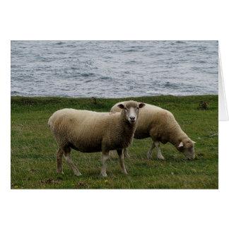 Cartão Os carneiros do longwool de Devon em Devon sul
