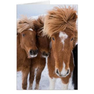 Cartão Os cavalos islandêses nuzzle, Islândia