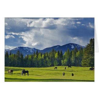Cartão Os cavalos pastam no pasto perto do peixe branco,