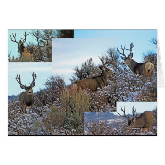 Cartão Os cervos de mula personalizam