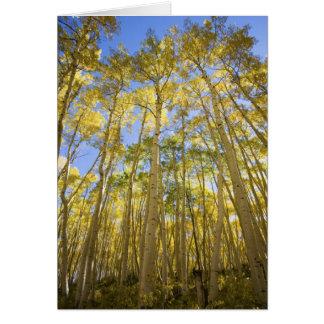 Cartão Os EUA, Colorado, álamos tremedores do outono ao