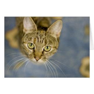 Cartão Os gatos simpáticos ajudam a facilitar a dor sobre