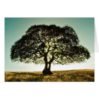 Cartão Os pêsames cardam com árvore
