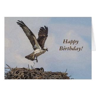 Cartão Osprey em um ninho