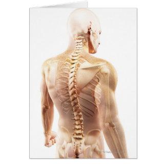 Cartão Ossos da parte superior do corpo