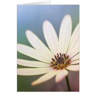 Cartão Osteospermum