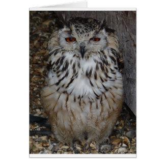 Cartão owl1