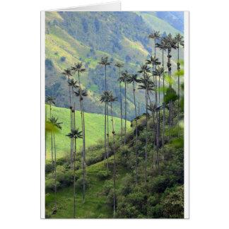 Cartão Palmas de cera de Qunidio no vale de Cocora