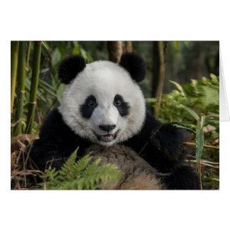 Cartão Panda nova feliz, China
