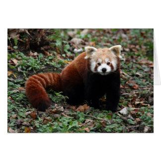 Cartão Panda vermelha
