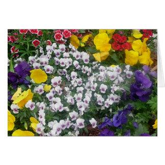 Cartão Pansies na primavera