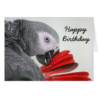 Cartão Papagaio das cinzas do cinza africano de Congo do