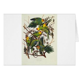Cartão Papagaio de Carolina - John James Audubon