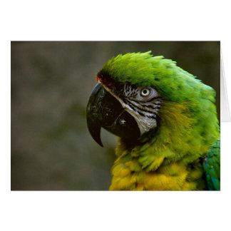 Cartão Papagaio do Macaw
