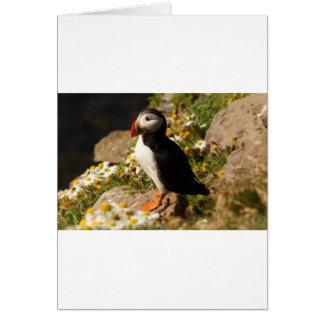 Cartão Papagaio-do-mar atlântico