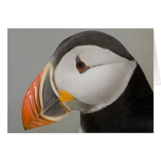 Cartão Papagaio-do-mar atlântico Notecards