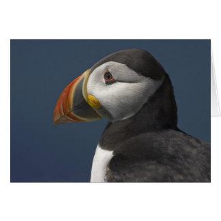 Cartão Papagaio-do-mar e céu azul