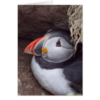 Cartão Papagaio-do-mar em um Burrow
