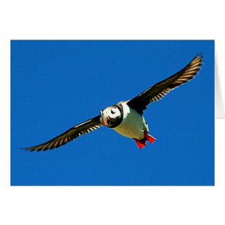 Cartão Papagaio-do-mar em vôo
