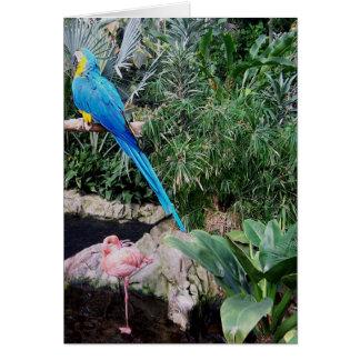Cartão Papagaio e flamingo