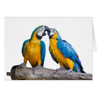 Cartão papagaio isolado do ararauna do ara