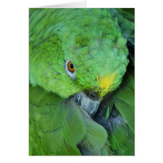 Cartão Papagaio verde de Amazon