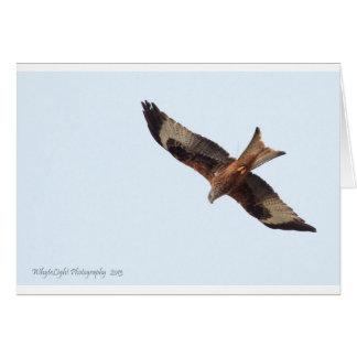 Cartão Papagaio vermelho no céu