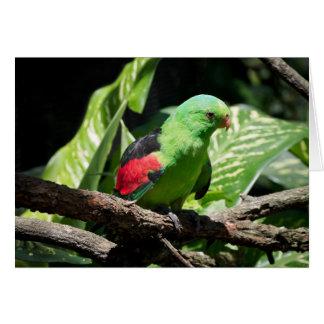 Cartão papagaio Vermelho-voado no membro de árvore