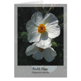 Cartão Papoila espinhosa - Notecard nativo