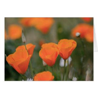 Cartão Papoilas californianas