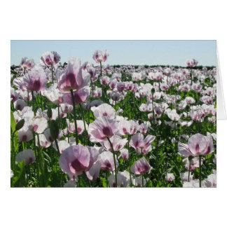 Cartão Papoilas cor-de-rosa