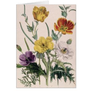 Cartão Papoilas e anêmonas
