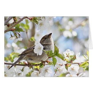 Cartão Pardal nas flores de cerejeira
