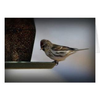 Cartão Pardal no alimentador do pássaro