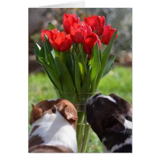 Cartão Pare e cheire as tulipas